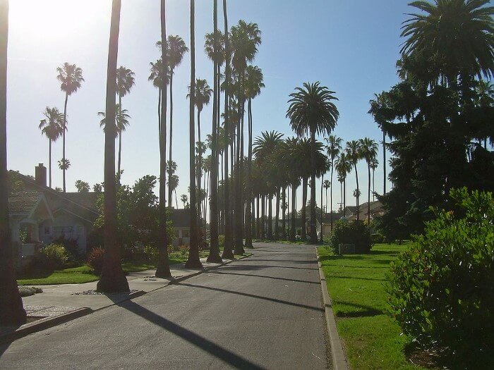 Palm Trees along raod in San Jose California