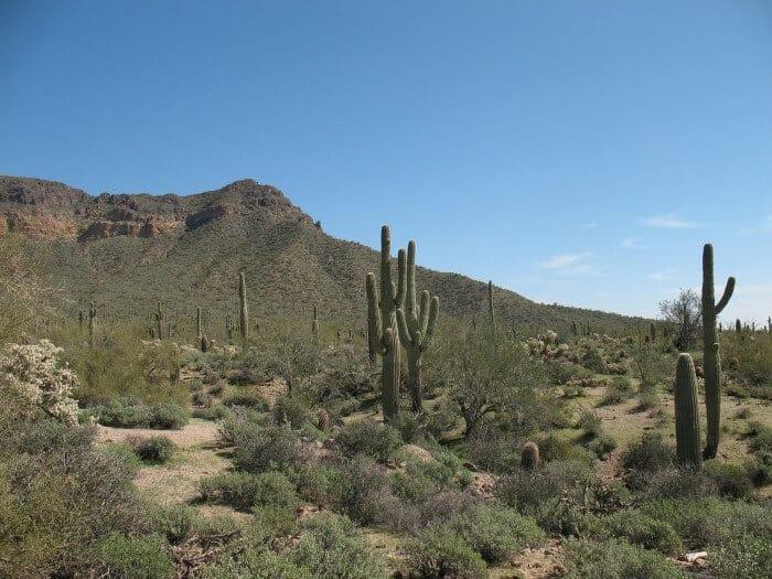 Phoenix desert